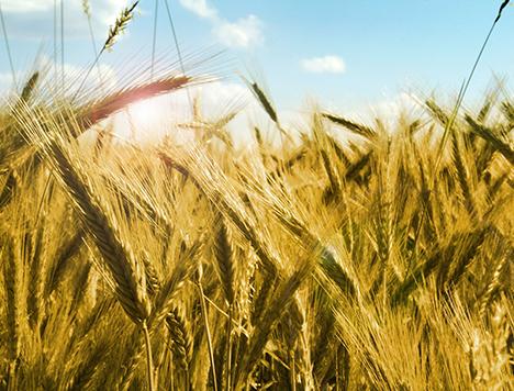 Proekologiczne rozwiązania w produkcji – Siatka EFFI-BALE™